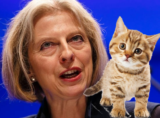 Theresa May and a kitten